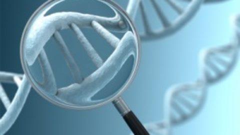 Autismo: scoperto legame con gene del cervelletto