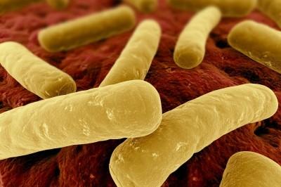 Flora batterica intestinale e autismo: nuove evidenze