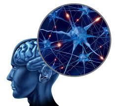 Struttura del cervello autistico, nuove scoperte